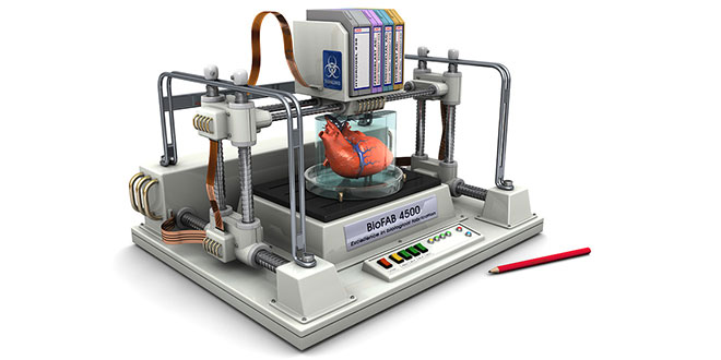 bioprinted-3D-heart