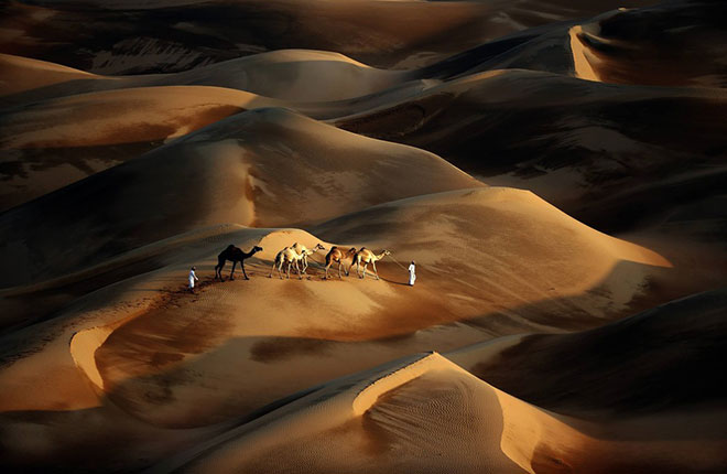 camile in desert