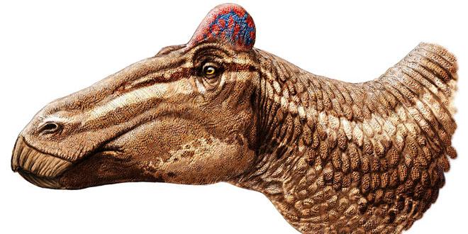 Edmontosaurus regalis