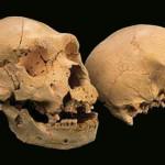 ADN-ul de 400000 ani schimbă teoriile evoluției