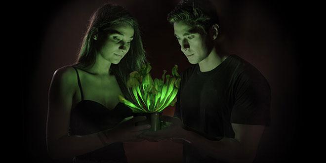 Plante bioluminescente