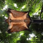 Cele mai interesante specii noi, descoperite în 2013