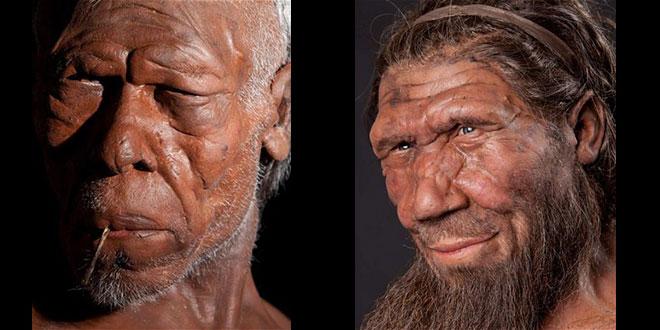 Homo sapiens și Homo neanderthalensis