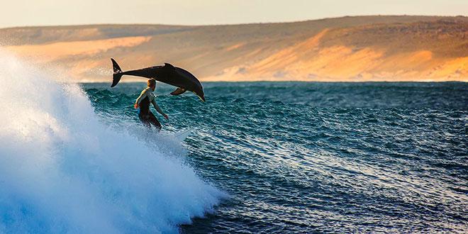 delfin Australia