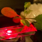 Plante bionice – nonotehnologia îmbunătățește fotosinteza