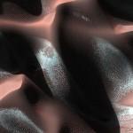 Imaginile săptămânii – Marlin albinos, Maci de deșert, În direct din spațiu