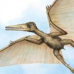 Kryptodrakon progenitor – cel mai vechi pterozaur pterodactil de până acum