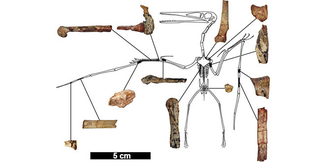 pterozaur pterodactil