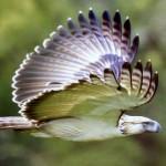 Top 10 păsări rare și pe cale de dispariție