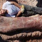 Cel mai mare dinozaur din lume a fost descoperit în Argentina