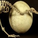 Pasărea Kiwi și misterul evoluției marilor păsări care nu zboară