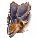 Mercuriceratops gemini, un nou dinozaur cu coarne