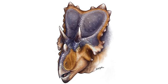 Mercuriceratopi