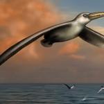 Pelagornis sandersi – cea mai mare pasăre zburătoare