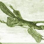 Scansoriopteryx – păsările nu ar fi evoluat din dinozauri