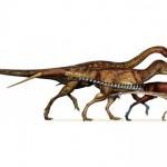 Dinozaurii theropozi au evoluat în păsările care zboară în prezent