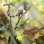 """Euharamiyida – """"veverițele"""" din Jurasic schimbă istoria mamiferelor"""