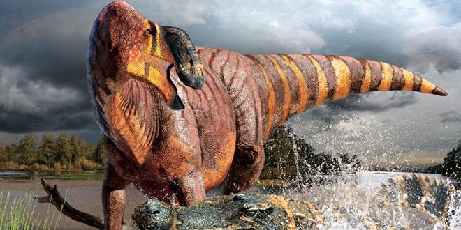 Rhinorex