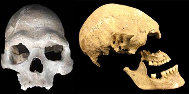 Cranii de vânător-culegător și agricultor / imagini Universität Tübingen
