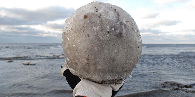 Bilă de gheță descoperită în Suedia / imagine Ottenby Fågelstation