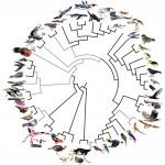 Evoluția păsărilor descifrată cu ajutorul geneticii
