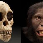 Australopithecus africanus ar fi utilizat unelte