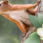 Purgatorius – primele primate trăiau în copaci