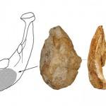 Primul topor de mână din os descoperit în China