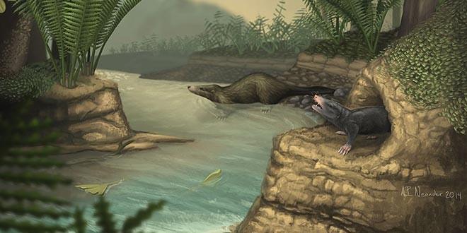 Docofossor brachydactylus