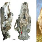 Josephoartigasia monesi – cel mai mare rozător mușca precum un tigru