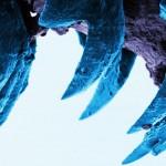 Cel mai rezistent material biologic – dinții melcului turtit