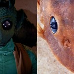 Peckoltia greedoi pare desprins din Star Wars
