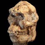 Australopithecus prometheus, Little Foot contemporan cu Lucy