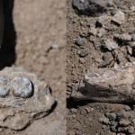 Australopithecus deyiremeda, vecinul lui Lucy