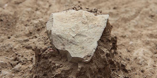 Unealtă de piatră descoperită în situl Lomekwi 3 / foto MPK-WTAP