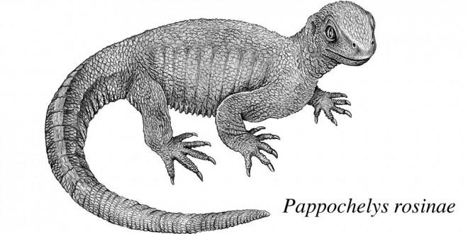 țestoasă primitivă