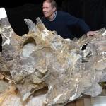 Regaliceratops peterhewsi, un triceratops neobișnuit