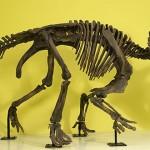Wendiceratops pinhornensis, unul dintre cei mai vechi dinozauri cu coarne
