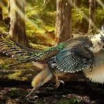 Zhenyuanlong suni, un dinozaur cu pene și aripi scurte