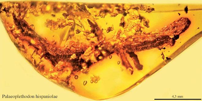 salamander in amber