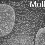 "Mollivirus sibericum, un nou virus ""gigant"" din Siberia"