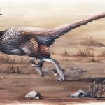 Dakotaraptor steini – un Velociraptor mult mai mare