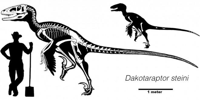 Dakotaraptor size