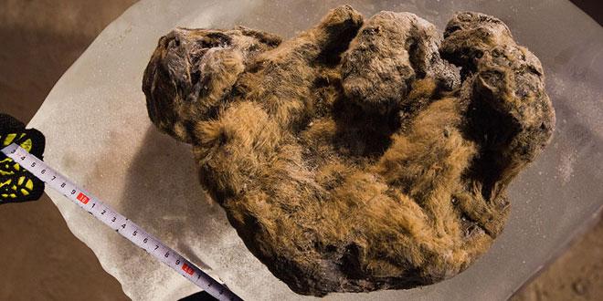 Leu de peșteră eurasiatic