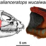 """Hualianceratops wucaiwanensis – dinozaurul """"față ornamentală"""""""