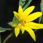 Când a înflorit prima floare în spațiu?