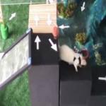 Şobolani-cyborg controlați de la distanță