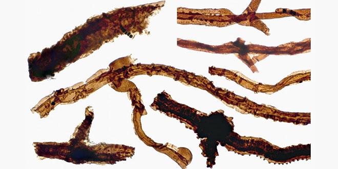 cea mai veche fosila