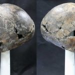 Craniul alungit din Gyeongju-si, Coreea de Sud