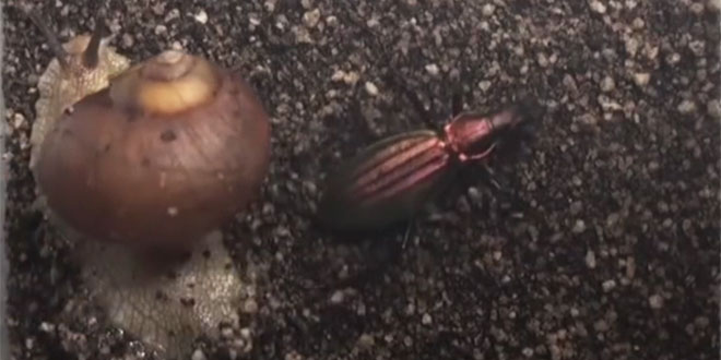 snail vs beetle
